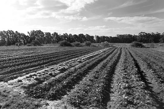 Producción agroecológica: juntaron 4.000 firmas por un plan nacional; hay un anteproyecto legislativo y otro de la comuna canaria