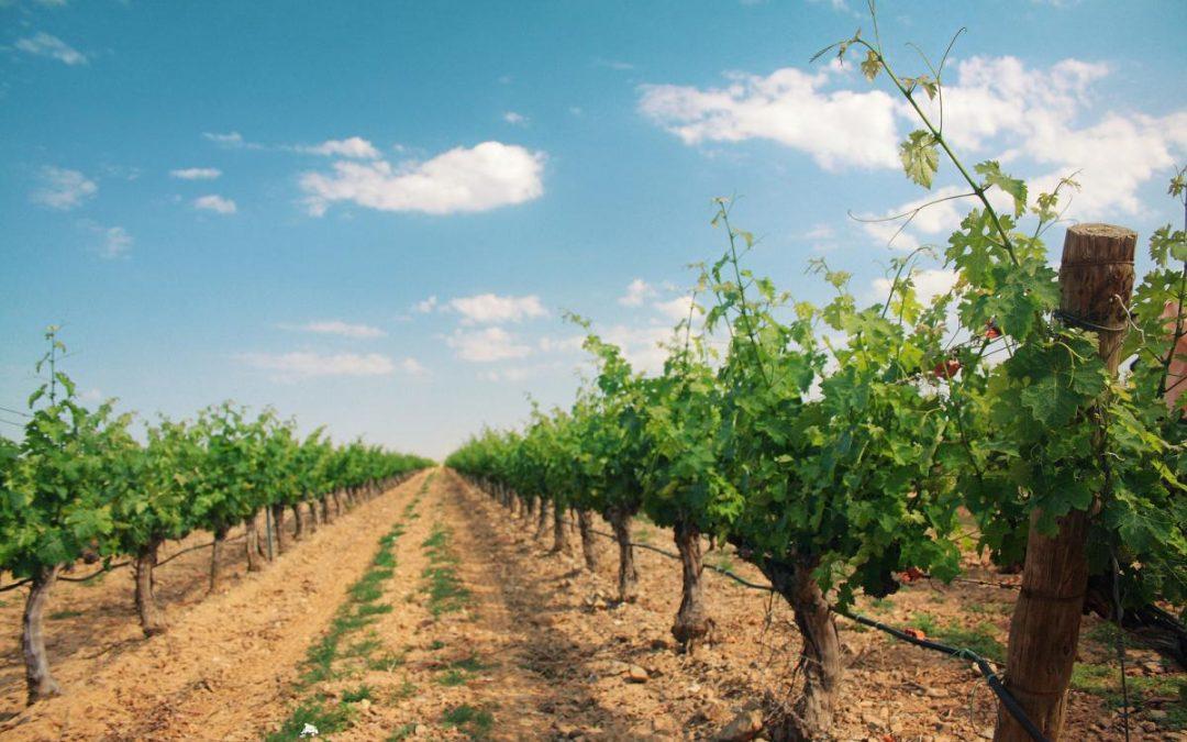 Experto chileno en fruticultura y viticultura ecológica visita Uruguay