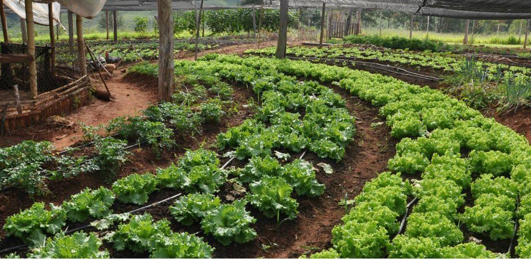 Zonas buffer agroecológicas en Canelones