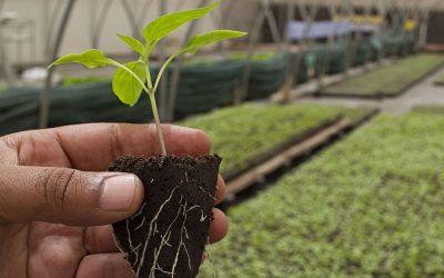 Plan Nacional de Agroecología una política pública posible, necesaria y urgente